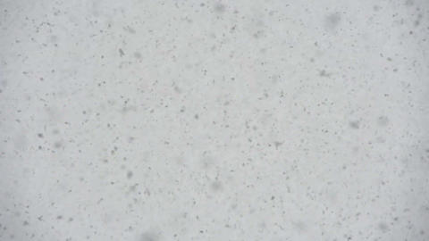 Large Flakes of Snow S HD Footage