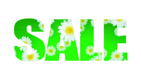 Sale Spring Summer Daisy (Loop) Stock Video Footage