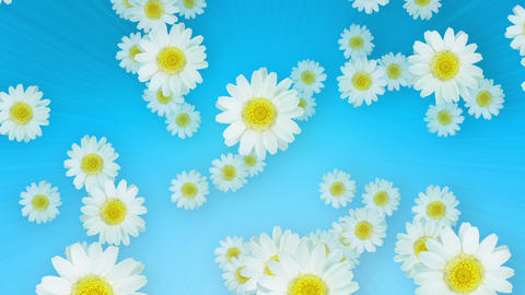 Spring Summer Daisies Blue Animation