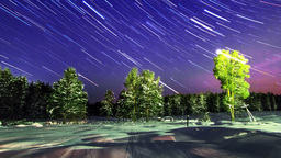 Stars over the winter forest. Line. Time Lapse. 4K Footage