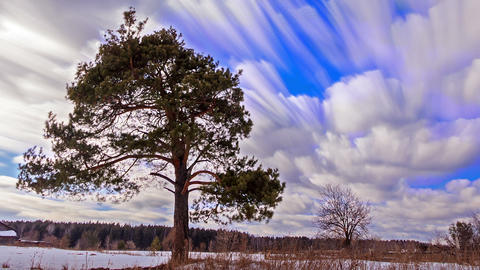 Pine against the sky. Blurry. Time Lapse Live Action