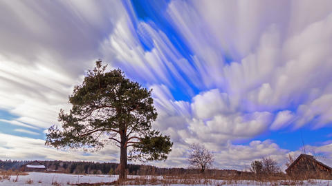 Single tree against the sky. Blurry. Time Lapse. 1280x720 Live Action