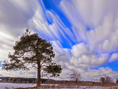 Single tree against the sky. Blurry. Time Lapse. 640x480 Footage