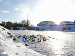 Ducks fed bread. Winter. 640x480 Stock Video Footage
