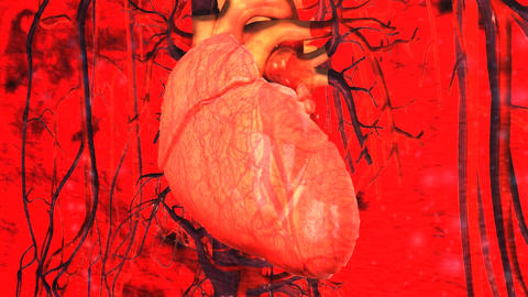 Medical Human Heart Cardio Vascular System Stock Video Footage