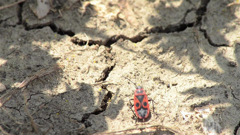 insects 2c Stock Video Footage