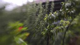 rain 11 Footage