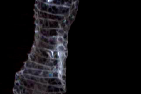 snakeskin 1 Stock Video Footage
