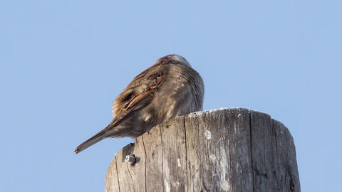 Sparrow Footage