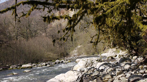 Mountain River among Trees and Stones in Gorge 10 Footage
