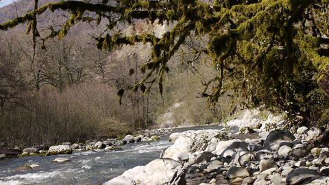 Mountain River among Trees and Stones in Gorge 10 Stock Video Footage