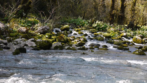Mountain River among Trees and Stones in Gorge 5 Stock Video Footage