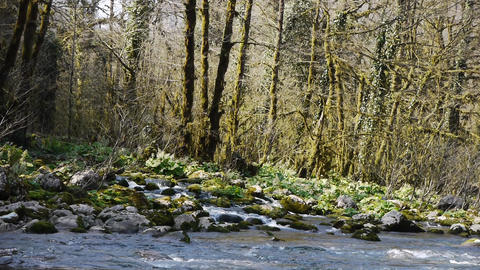 Mountain River among Trees and Stones in Gorge 3 Stock Video Footage