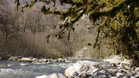 Mountain River among Trees and Stones in Gorge 7 Footage
