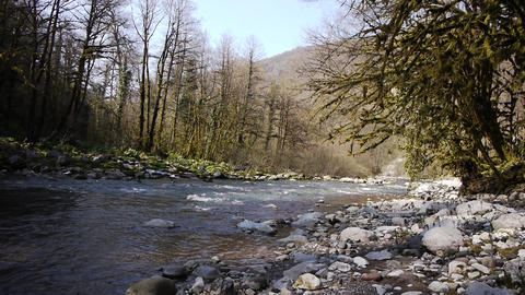 Mountain River among Trees and Stones in Gorge 2 Stock Video Footage