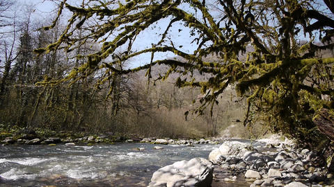 Mountain River among Trees and Stones in Gorge 6 Stock Video Footage