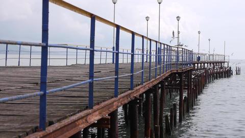 Sea Gulls On Old Wood Pier 1 stock footage