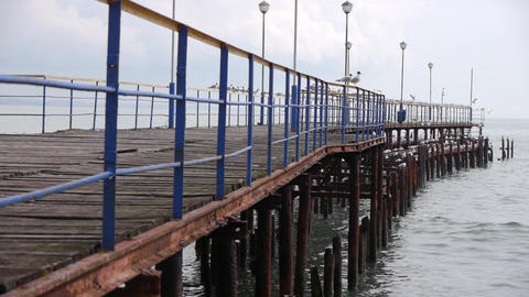 Sea Gulls on Old Wood Pier 2 Stock Video Footage