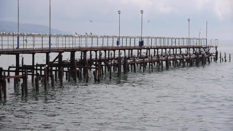 Sea Gulls on Old Wood Pier 4 Stock Video Footage