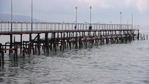 Sea Gulls On Old Wood Pier 4 stock footage