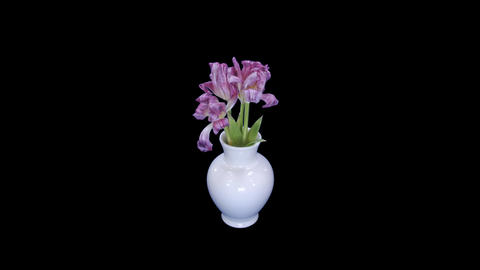 Time-lapse of opening and dying pink tulips bouquet with... Stock Video Footage