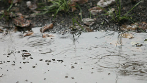 rain puddle with bubbles Stock Video Footage
