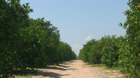 Orange Grove Path stock footage