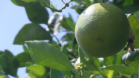 Green Orange HD Stock Video Footage