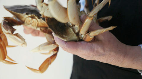 dungeness crabs Footage