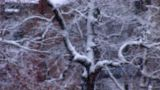 snow 3 Footage