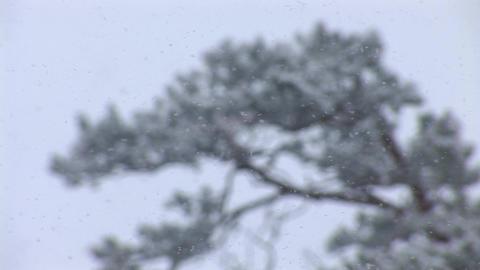 snow 5 Stock Video Footage