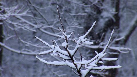 snow 7 Footage