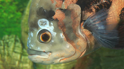 fish 2 Stock Video Footage