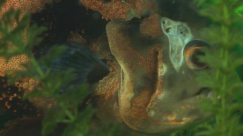 Aquarium Fishes 1