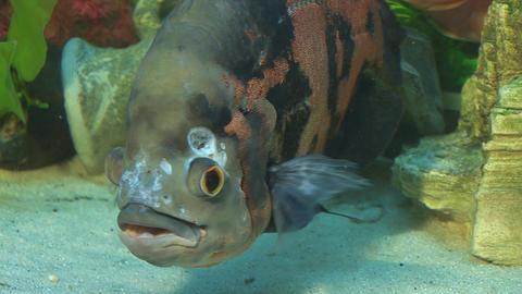fish 6 Footage