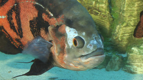 fish 6 Stock Video Footage