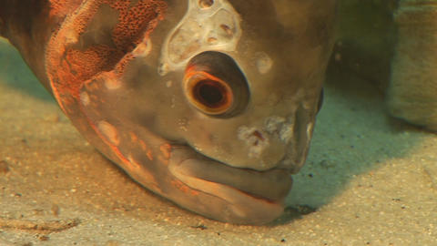 fish 8 Stock Video Footage