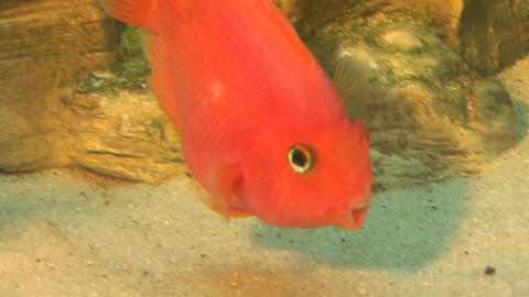 fish 12 Stock Video Footage