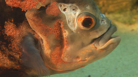fish 12 Footage