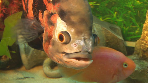 fish 14 Stock Video Footage