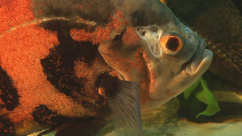 fish 18 Stock Video Footage