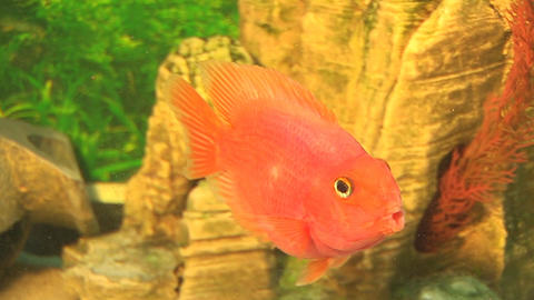 fish 20 Stock Video Footage