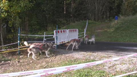 Dog sledding Stock Video Footage