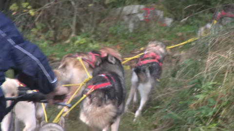 Dog sledding Stock Video Footage