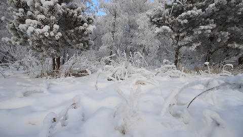Winter scene 5 Stock Video Footage
