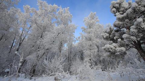Winter scene 7 Stock Video Footage