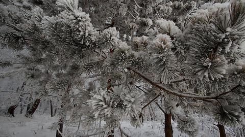 Winter scene 9 Stock Video Footage