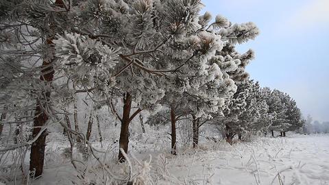 Winter scene 11 Stock Video Footage