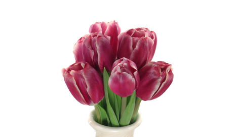 Stereoscopic 3D time-lapse of opening red tulips 1a... Stock Video Footage