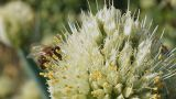 Bee 1 Footage